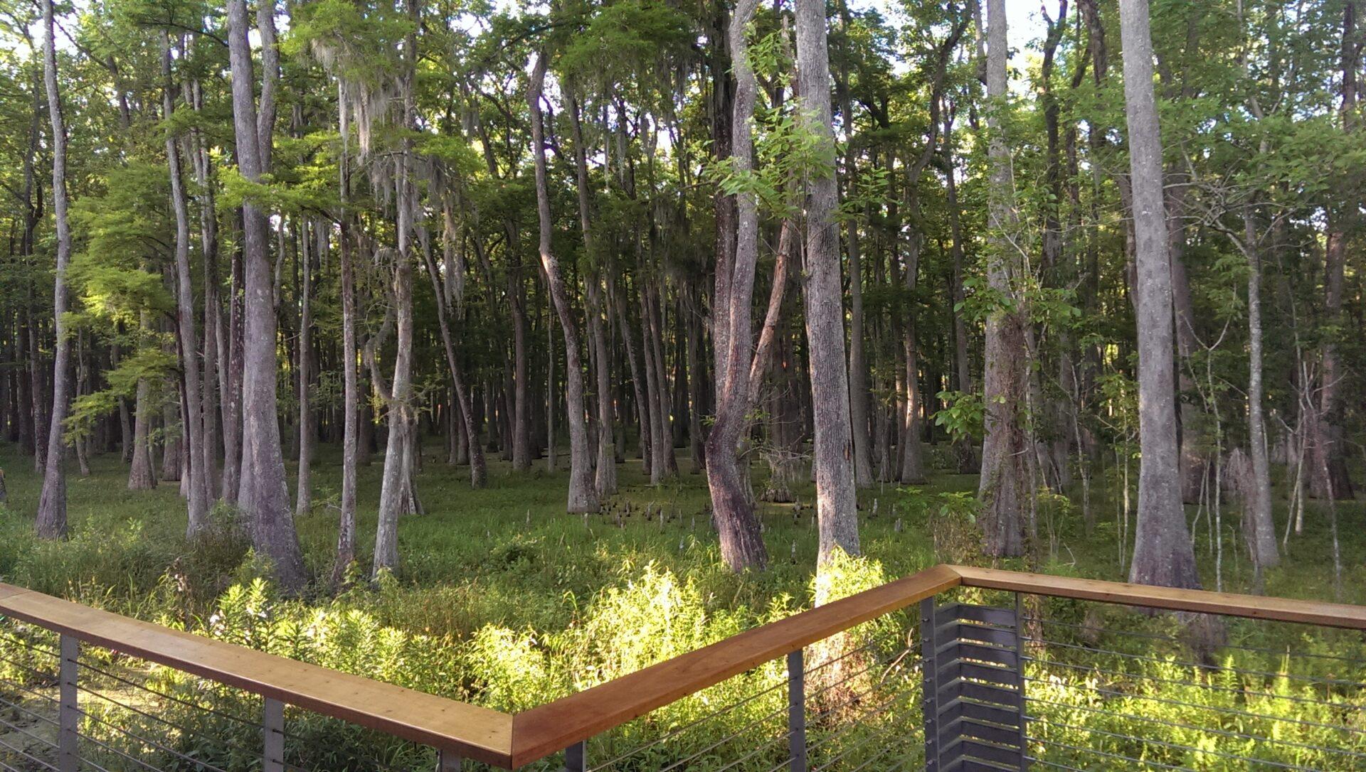 Louisiana Tour - Morgan City Swamp